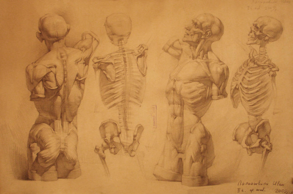 Human Anatomy 22 By Ivanlaliashvili On Deviantart