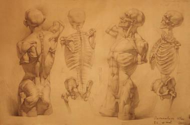 human anatomy 22 by IvanLaliashvili