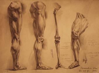 human anatomy 24 by IvanLaliashvili