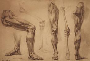 human anatomy 30