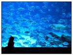 Blue Wonders