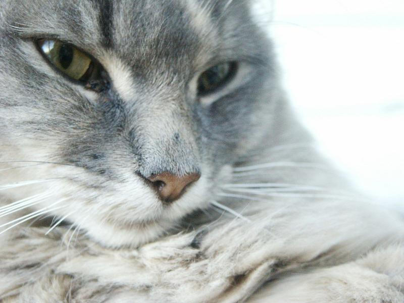 CAT CLOSE-UP by closetome