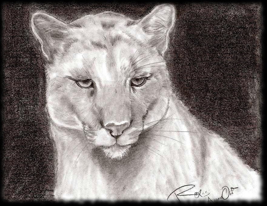 Tiffany the Puma by RoXas-AmaraOri