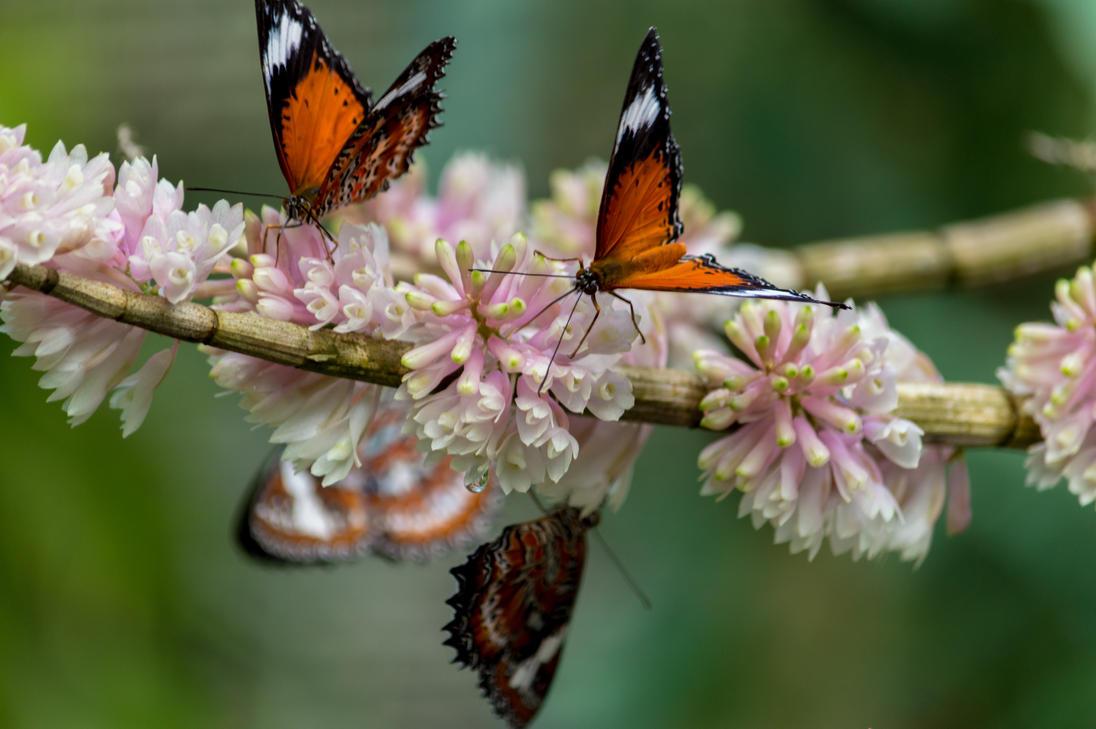 Butterflys by BungEye