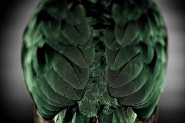Bird feathers by demonfury