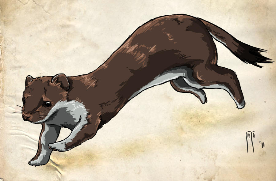 Stoat - by rob8370 by SEMC