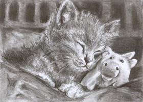 lovely cat by hheleri