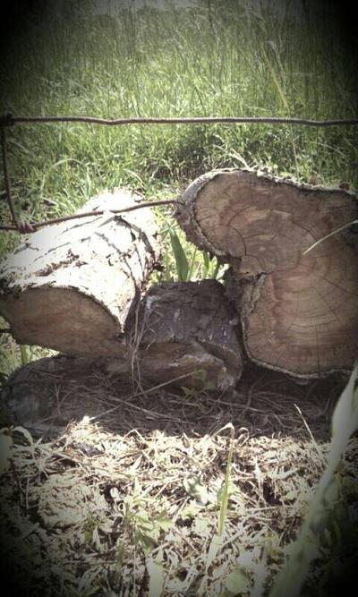 wood by dward0515