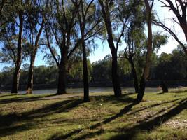 Gumtrees by AussieFlea