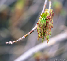 Arrival of Spring