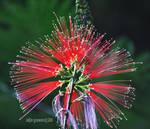 spool flower