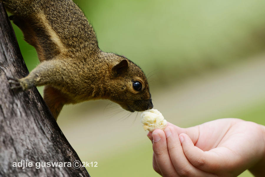 Kissing the Food