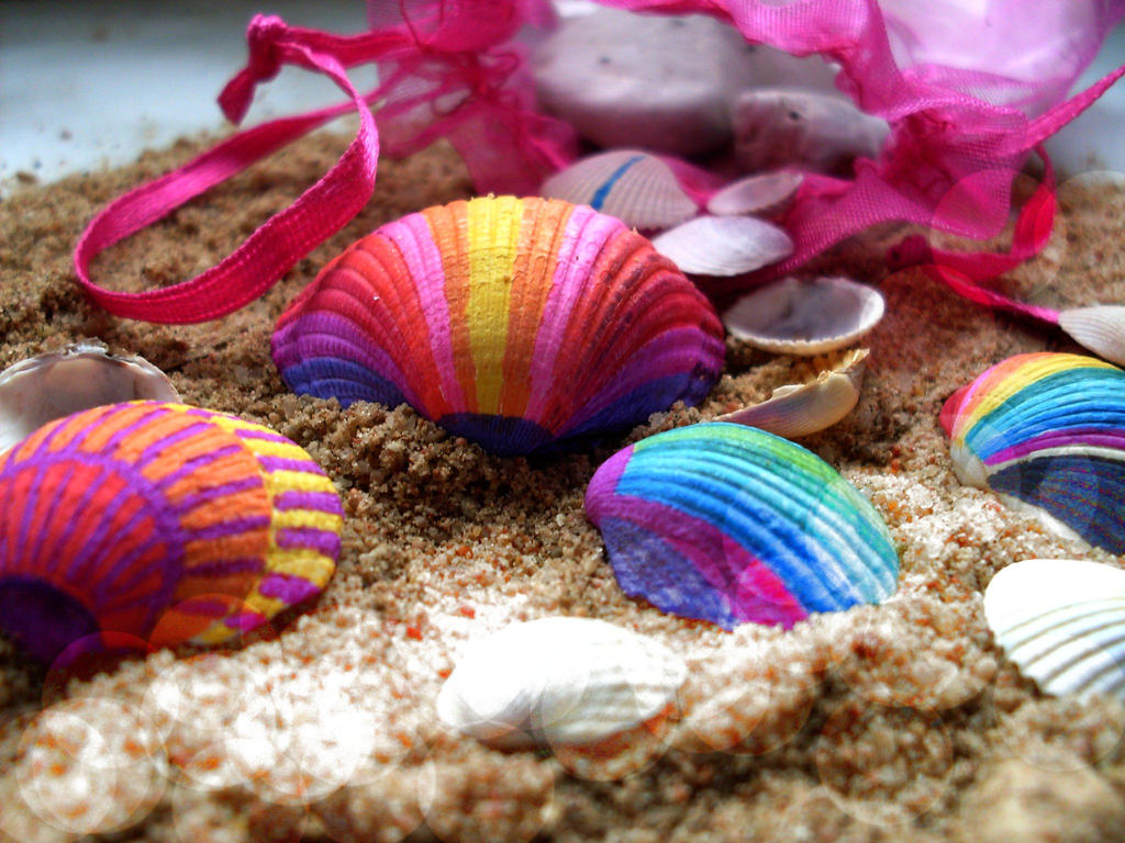 Colorful seashells viewing gallery - Types of seashells for kids ...