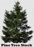 Pine Tree Stock