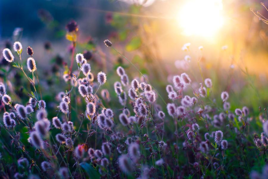 sun by blackflycat