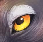 Wolf's Eye [ Free Use ]