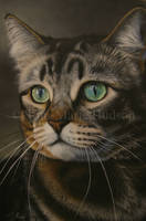 Observe - Tabby cat portrait. by Canis-Lupess
