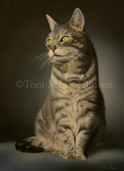 Monty - Commissioned portrait