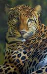 Awakened - Leopard portrait