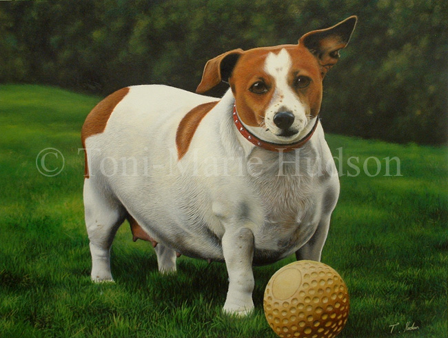 Must see Mixed Chubby Adorable Dog - meg___jack_russell_terrier__by_canis_lupess  Perfect Image Reference_394351  .jpg