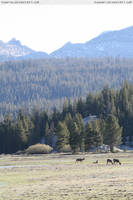 Tuolumne Meadows 5 by RoonToo