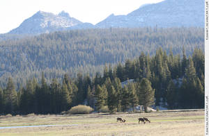 Tuolumne Meadows 7 by RoonToo