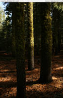 3 trees by RoonToo
