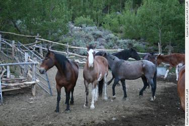 Herd 1 by RoonToo