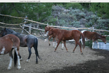 Herd 2 by RoonToo