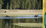 Tuolumne Meadows 13