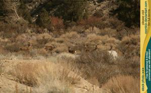 Mule deer herd 2 by RoonToo