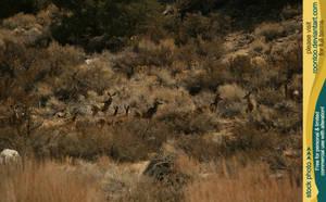 Mule deer herd 4 by RoonToo