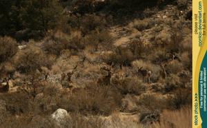 Mule deer herd 5 by RoonToo