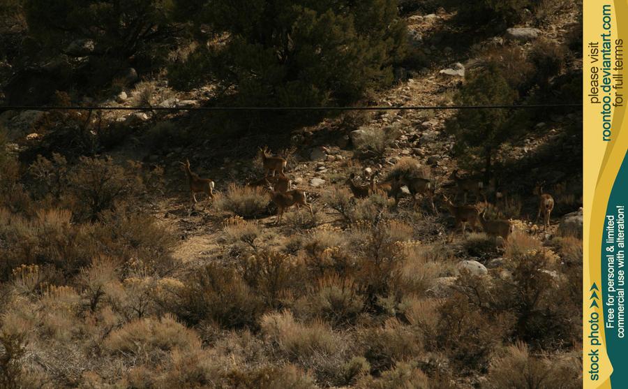 Mule deer herd 6 by RoonToo