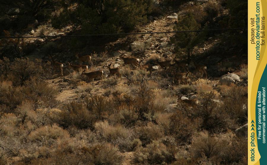 Mule deer herd 7 by RoonToo