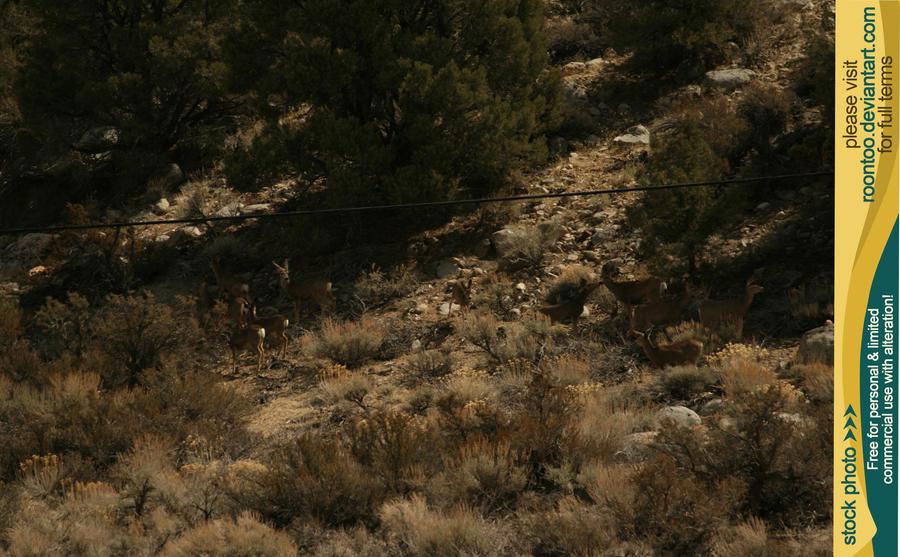 Mule deer herd 9 by RoonToo