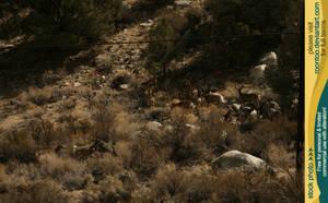 Mule deer herd 10 by RoonToo