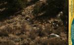 Mule deer herd 10