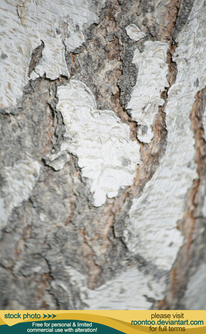 Bark 01 - White Birch by RoonToo