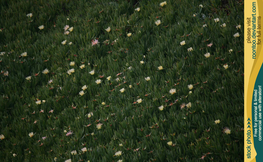 Ground cover by RoonToo