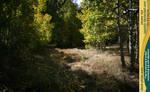 Aspen grove 01