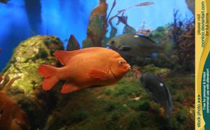 Aquarium 03 by RoonToo