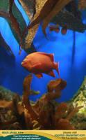 Aquarium 05 by RoonToo