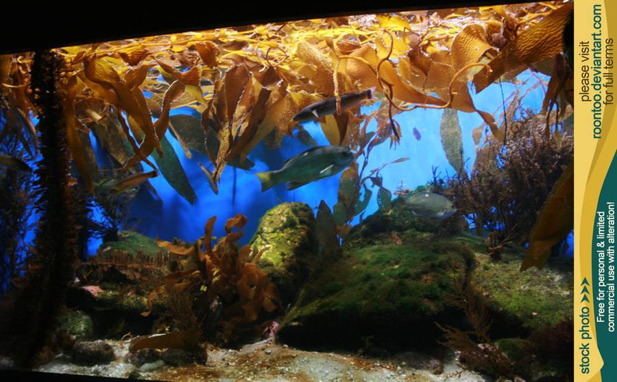Aquarium 06 by RoonToo