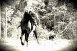Old Photo-stallion in the woods by Mr-Goldfish
