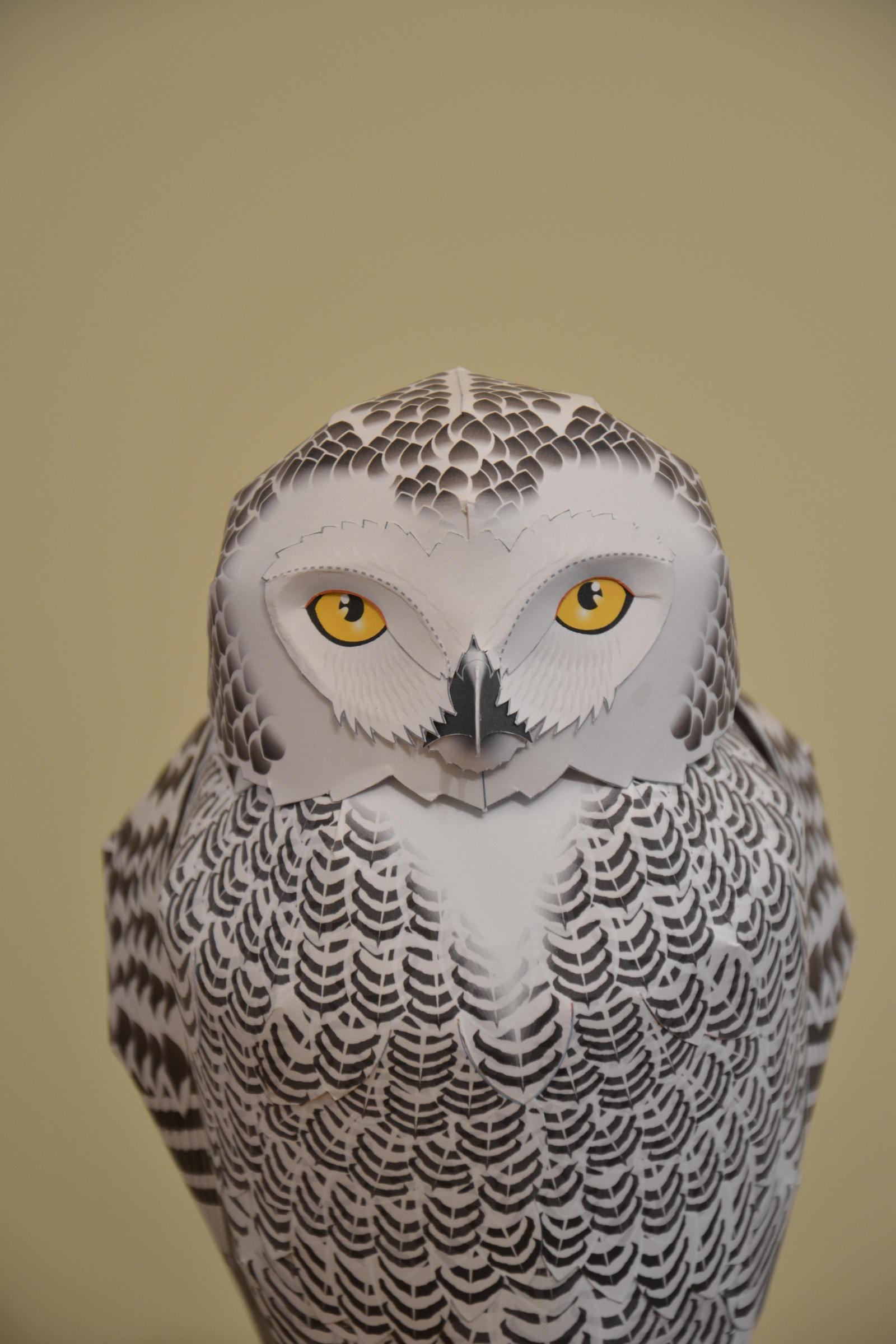 Canon creative park snowy owl by radoslawkamil on deviantart canon creative park snowy owl by radoslawkamil jeuxipadfo Choice Image