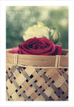 Basket of spring . . . by Miss-Photo