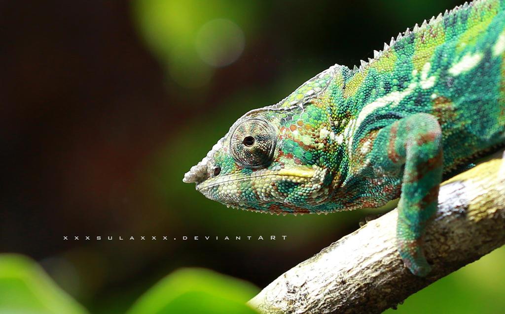 Chameleon by xxxsulaxxx