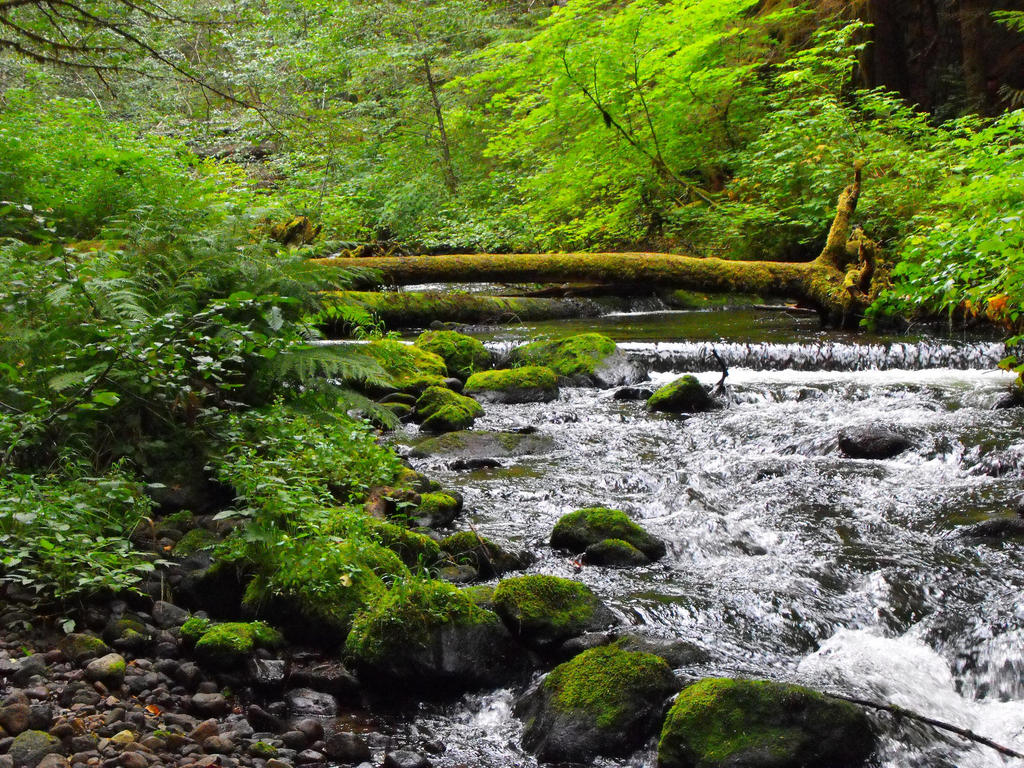camp creek buddhist dating site Camp creek lodge – 2 plus bedroom 1 queen, 5 singles) 15 bathrooms tv, dvd, and free comfortable cabins high in the northern oregon cascades village of.