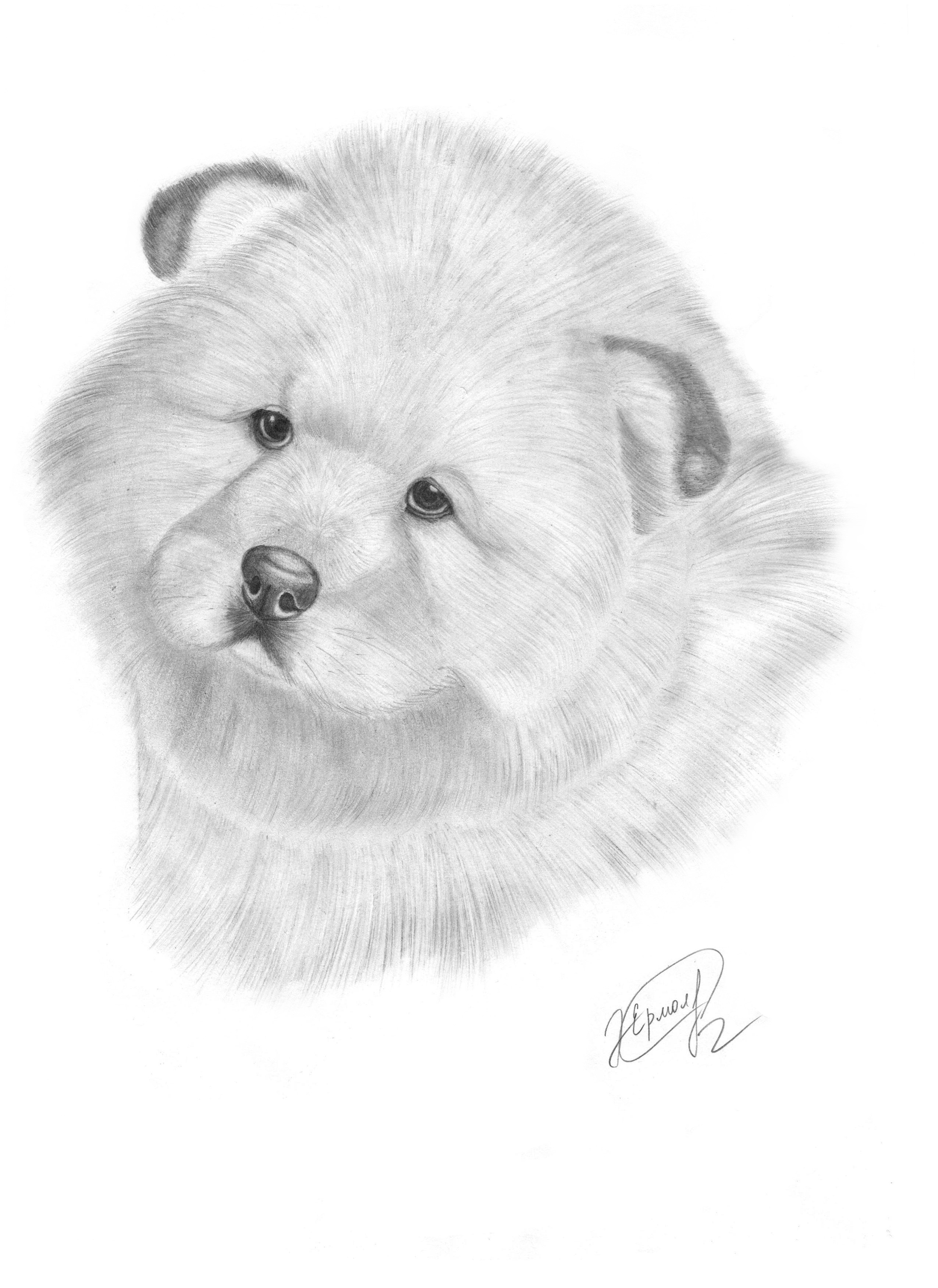Puppy chow chow by evelinapoodle on deviantart